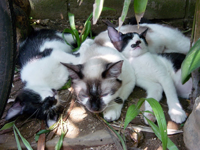白黒子猫里親募集中