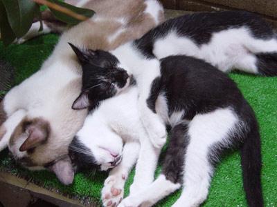 白黒猫オス里親募集中